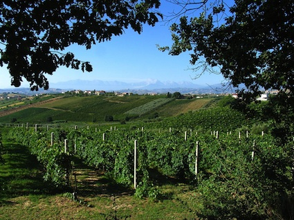 Italy: Wine Country